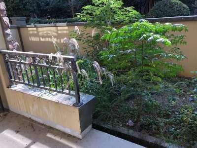 伟星蓝山花园洋房一楼带院子新空毛坯满2随时可看房